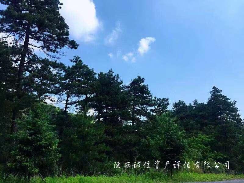 玉华宫景区林业调查及优德88反水比例